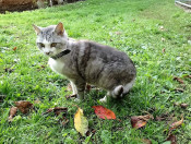 Moritz-die-Katze