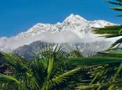 tschigat-palmen-winter