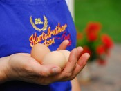 durnmueller-seis-eier
