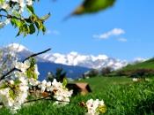 Frühling im Mittelgebirge des Eisacktal - Blick von Karnol bei Brixen auf die Zillertaler Alpen