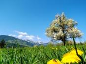 Frühling in Natz/Schabs mit Blick auf Spinges und der wilden Kreuzspitze