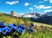 Mountainbiker im Bike-Paradies Plose mit den beeindruckenden Aferer Geisler im Hintergrund