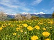 Frühling in Natz/ Schabs mit Blick auf Meransen