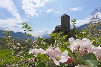 Frühling in Südtirol - Schloss Tirol