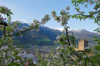 Frühlingsreisen nach Südtirol - Naturns