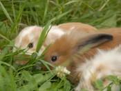 gfinkerhof-voels-kaninchen