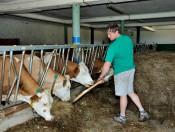 goldrainerhof-kastelruth-kuehe