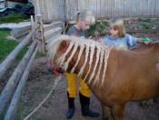 hof-zerund-kastelruth-pferd