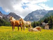 kleinalm-schlanders-pferde