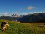 Kreuznerhof in Lüsen - Ihr Urlaub auf dem Bauernhof in Südtirol