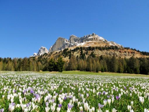 Wandern im Frühling