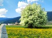 Das malerische Dorf Pfalzen an der Pustertaler Sonnenstraße im Frühling