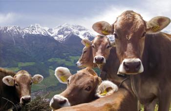 Frühlingserwachen bei Mensch und Tier