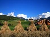 mairhof-lajen-getreide