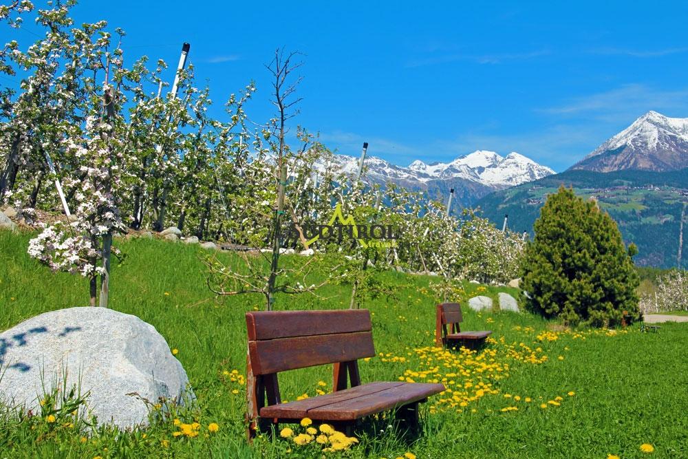 Urlaub in natz schabs dem sonnigen hochplateau im eisacktal for Bilder fruhling