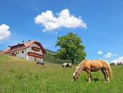 niederhaeusererhof-pfalzen-pferde