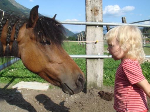 oberauerhof-ridnaun-pferd
