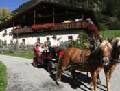 oberauerhof-ridnaun-pferde