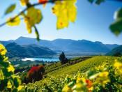 Urlaub auf dem Bauernhof in Kaltern am Penegalhof – Die Ferienregion in Südtirols Süden