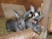 peternaderhof-voels-kaninchen-streicheln