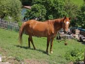 peternaderhof-voels-pferd