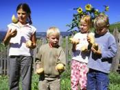 pristingerhof-seis-kinder-mit-kartoffeln