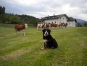 Agriturismo Südtirol - Schgagul Bauernhof Kastelruth