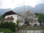 schmalzerhof-eppan-fruehling