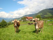schnagererhof-brixen-tiere