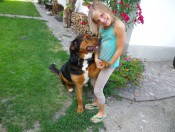 sedlhof-brixen-hund