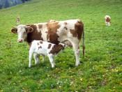 Bauernhofurlaub Kiens Südtirol - Ferienwohnungen Pustertal