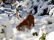 hund-im-schnee
