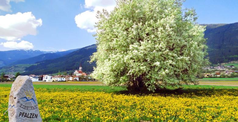 Pfalzen in der Ferienregion Kronplatz