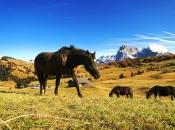 pferde-seiser-alm