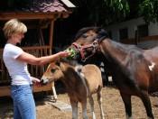 waldharthof-natz-pferde