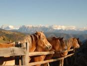 wietererhof-jenesien-pferde
